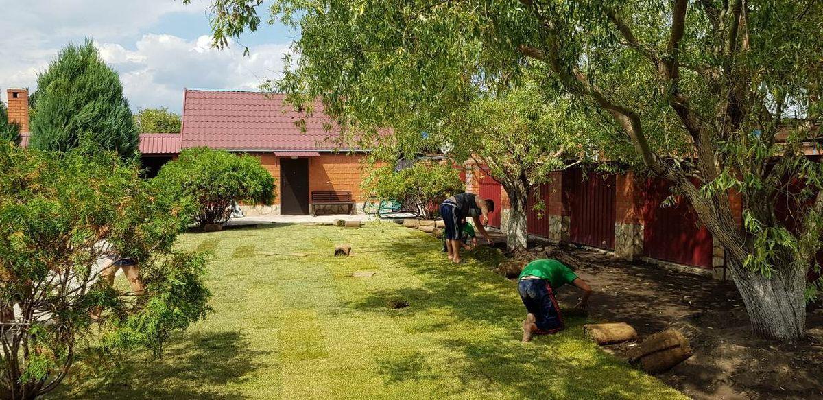 Рулонный газон в Саратове 1-3