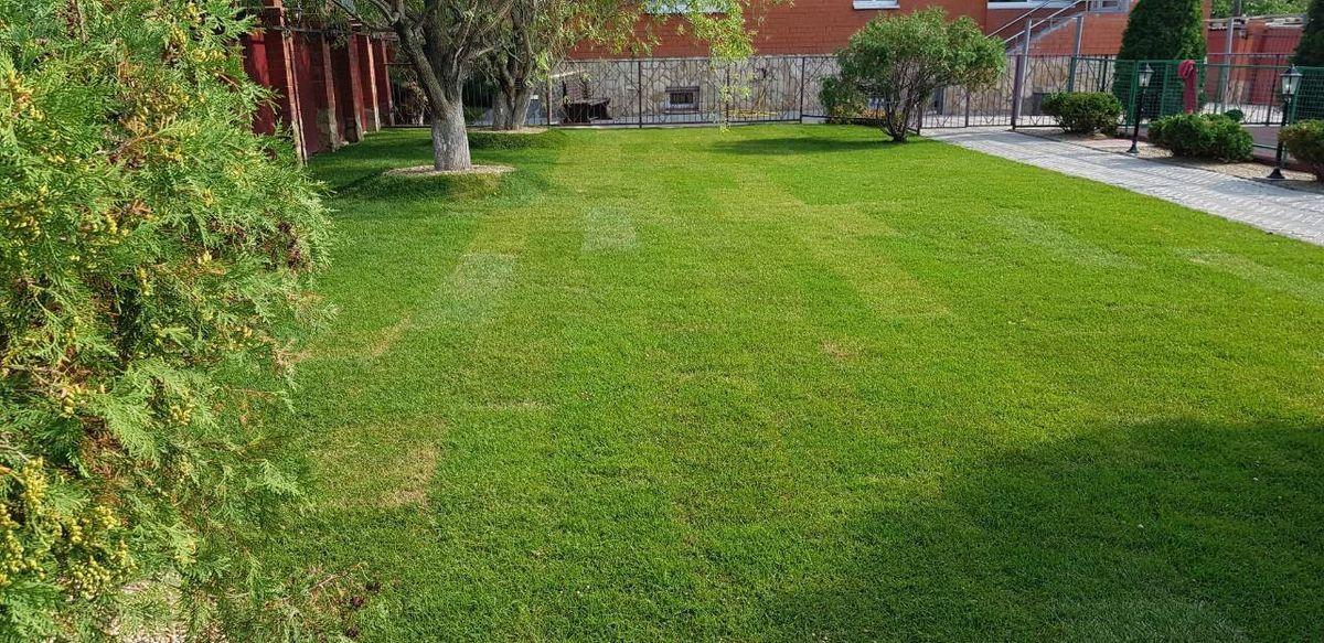 Рулонный газон в Саратове 1-4