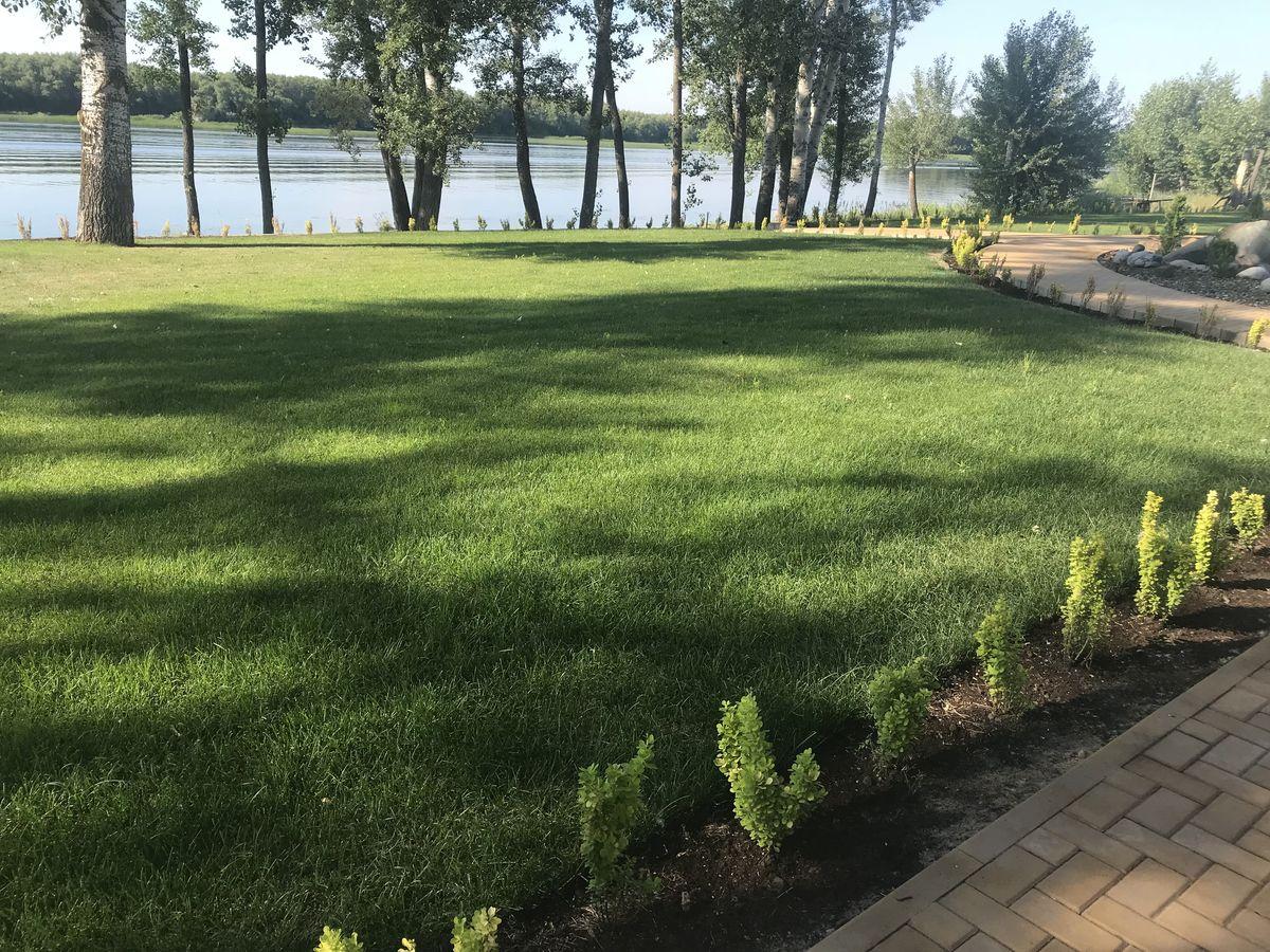 Рулонный газон в Саратове 2-4