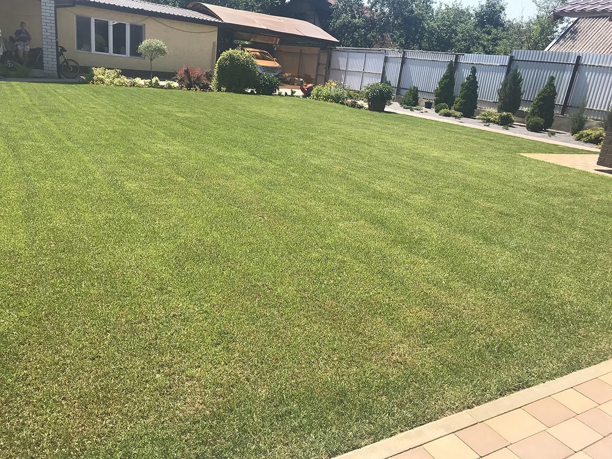 Рулонный газон в Саратове 3-1