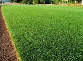 Цена рулонного газона 3
